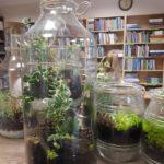 rośliny wszklanym słoju